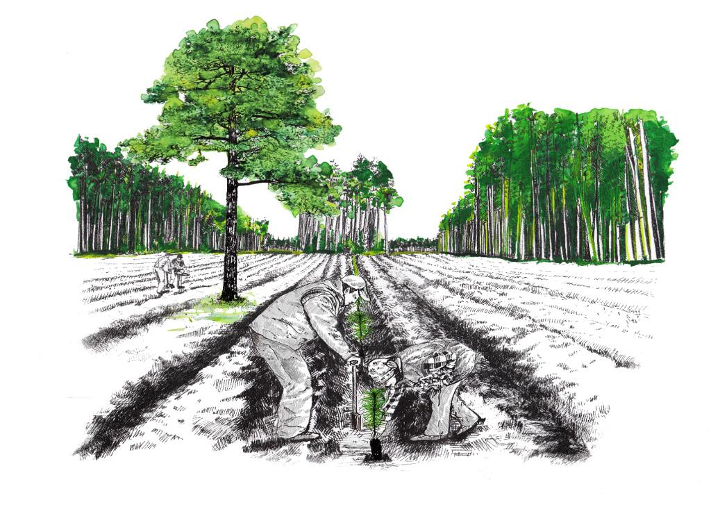 """""""Sadzimy 1000 drzew na minutę"""", źródło: mat. org."""