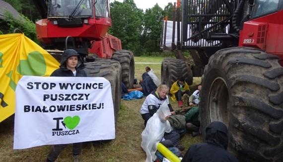 Aktywiści ponownie blokują wycinkę w Puszczy Białowieskiej, fot. Aneta Gałaburda