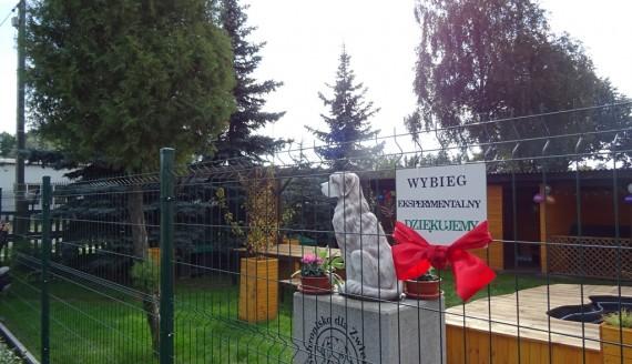 W Schronisku dla Zwierząt w Białymstoku powstał eksperymentalny wybieg, fot. Aneta Gałaburda