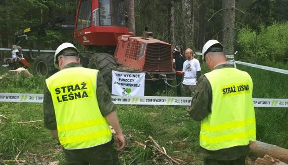 Protest aktywistów Greenpeace i Dzikiej Polski w Puszczy Białowieskiej, fot. Ryszard Minko