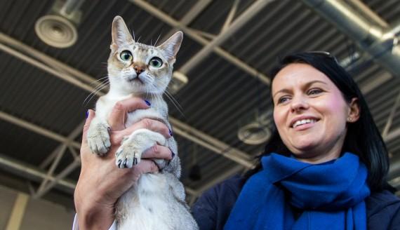 Międzynarodowa Wystawa Kotów Rasowych w Białymstoku, fot. Monika Kalicka