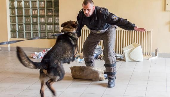 Szkolenie psów policyjnych, fot. Joanna Żemojda