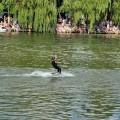 Pływanie na Byle Czym, 31.07.2016, fot. Monika Kalicka