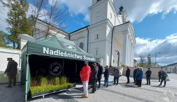 Darmowe sadzonki świerków papieskich trafiły do mieszkańców Suwałk, fot. Iza Kosakowska