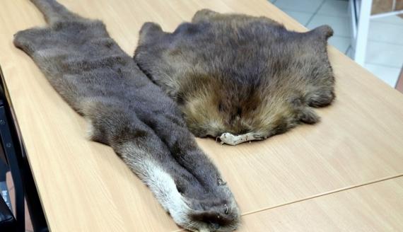 Rosjanin próbował wwieźć do Polski skóry zwierząt chronionych, źródło fot.: www.podlaskie.kas.gov.pl