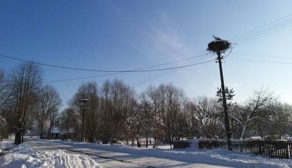 W Topolanach zimuje samotny bocian, fot. Ryszard Minko