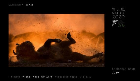 źródło: Związek Polskich Fotografów Przyrody, fot. Michał Kość