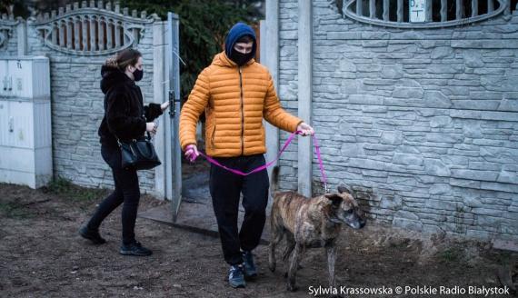 Białostoczanie odpowiedzieli na apel o zabieraniu psów ze schroniska, po pożarze na terenie MPO, fot. Sylwia Krassowska