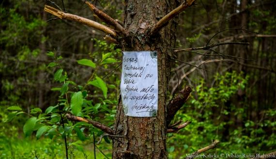Śmieci w lasach, fot. Monika Kalicka