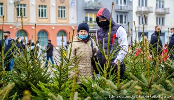 Białostoczanie wymienili sztuczne choinki na żywe drzewka, fot. Sylwia Krassowska