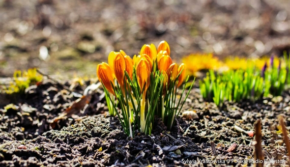 Pierwszy dzień wiosny w Białymstoku, fot. Sylwia Krassowska