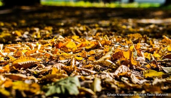 Pierwszy dzień kalendarzowej jesieni w Białymstoku, fot. Sylwia Krassowska