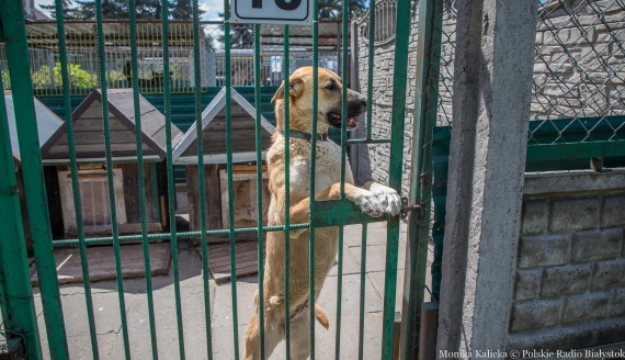 Wolontariusze odwiedzają psy w białostockim schronisku, fot. Monika Kalicka