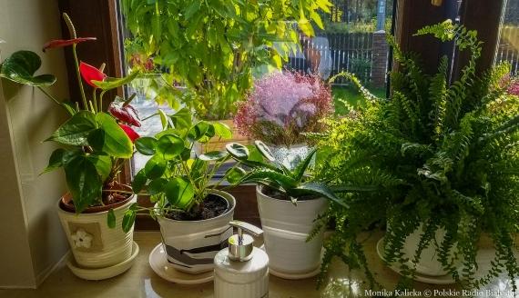 Rośliny z kolekcji Barbary Gajdowskiej, fot. Monika Kalicka