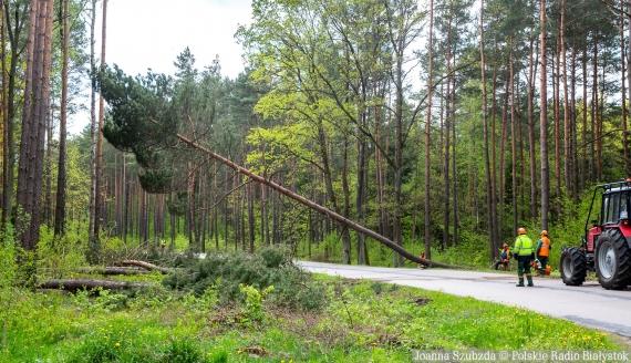Wycinka drzew na trasie Białystok - Olmonty, fot. Joanna Szubzda