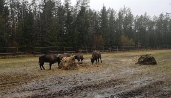 źródło: Regionalna Dyrekcja Lasów Państwowych w Białymstoku