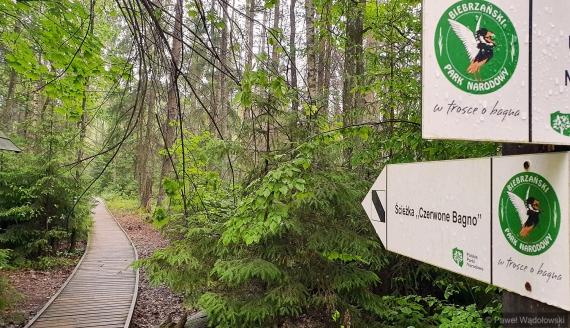 Biebrzański Park Narodowy, Ścieżka Czerwone Bagno, fot. Paweł Wądołowski